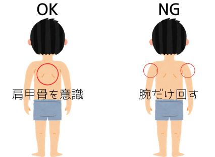 褐色脂肪細胞,肩甲骨,ダイエット,痩せる